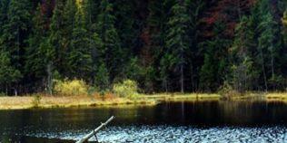 Minunea din Muntii Vrancei. Legendele Lacului Negru: de ce in apa nu traiesc pesti, iar plantele au puteri vindecatoare