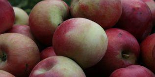Gustul fara egal al merelor de altadata. Cum au disparut din Romania soiurile gurguesti, tigance sau merele-pere