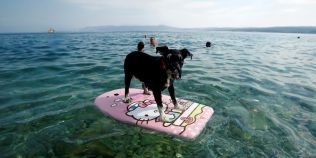 Tara europeana in care a fost inaugurata prima plaja pentru patrupede: cum sunt rasfatati cainii care vin sa se relaxeze