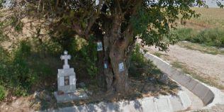 Dudul romanesc considerat facator de minuni care apare pe Google Maps sub denumirea de